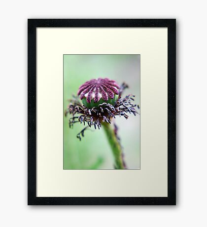 graceful ageing Framed Print