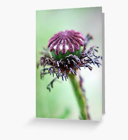 graceful ageing Greeting Card