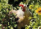 The Garden Chicken by Elaine Manley