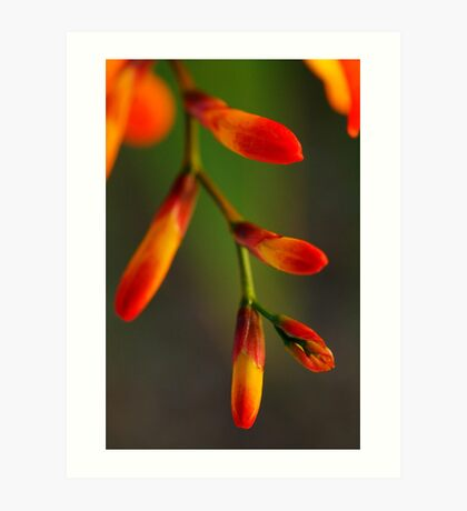 Natures Red Yellow and Green Art Print