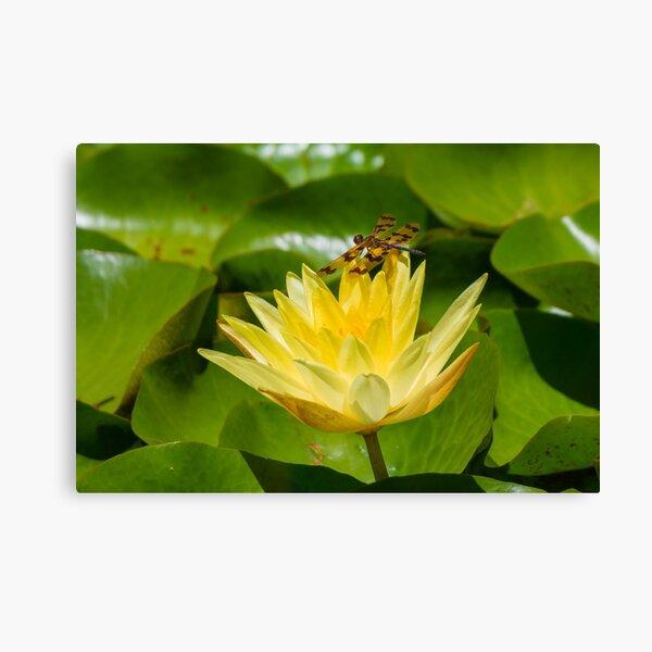 Graphic Flutterer Dragonfly Canvas Print
