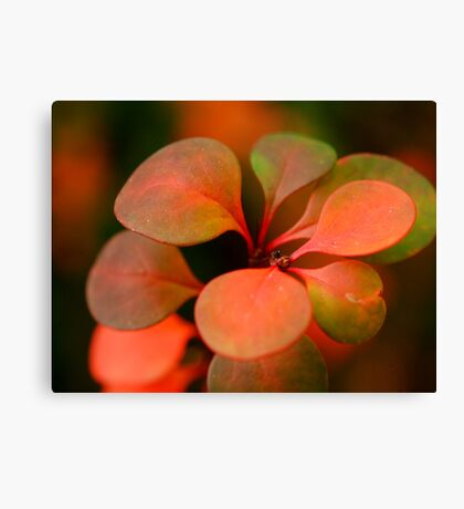 Soft Winter Colours Canvas Print