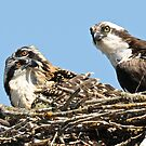 Three little ones at 25 days old by Carl LaCasse