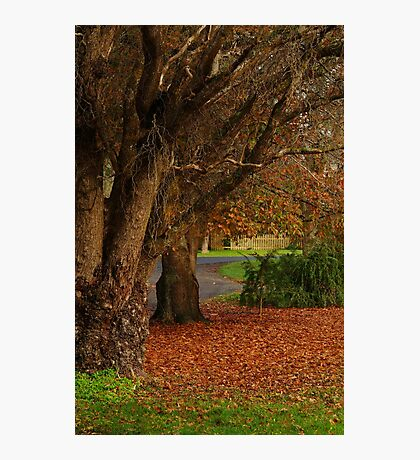 Forrest Park Photographic Print