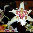 Orchid 1 by Mattie Bryant