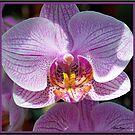 Orchid #4 by Mattie Bryant