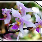 Orchid #5 by Mattie Bryant