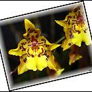 Orchid # 8 by Mattie Bryant