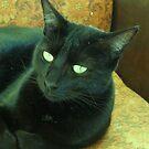 Retro Cat by NomadicGoddess