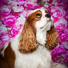 Teddy | Cavalier King Charles Spaniel by Peggy Colclough