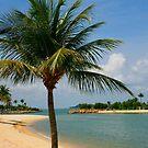 Palm Beach Paradise by John Wallace