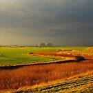 Green, Gold and Grey by Will Kemp