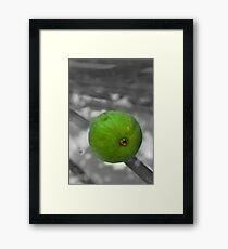 Fig-Rancho Cucamonga, Ca Framed Print
