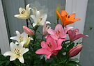Assorted Lilies by AnnDixon