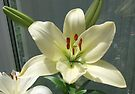 Off White Lily by AnnDixon