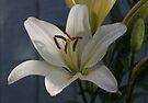 White Lily by AnnDixon