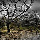 Provence by laurentlesax