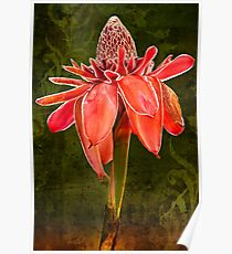 Kym's Red Torch Ginger Poster