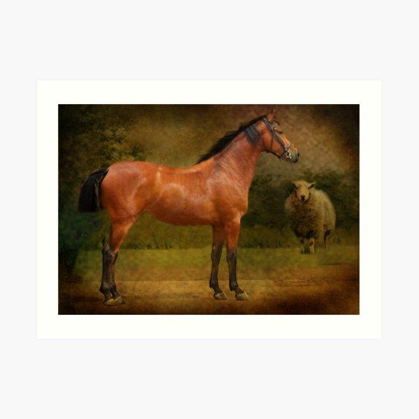 The  Race Horse. (TB X Polish Warmblood ) Art Print