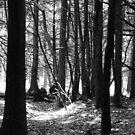 Walk in the Woods by vigor