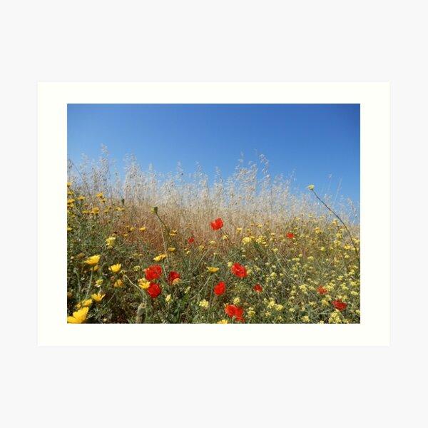 Cyprus Flowers Art Print