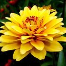 Colors of Nature - Yellow flower 001 by dawiz1753