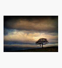 Texture Landscape Photographic Print