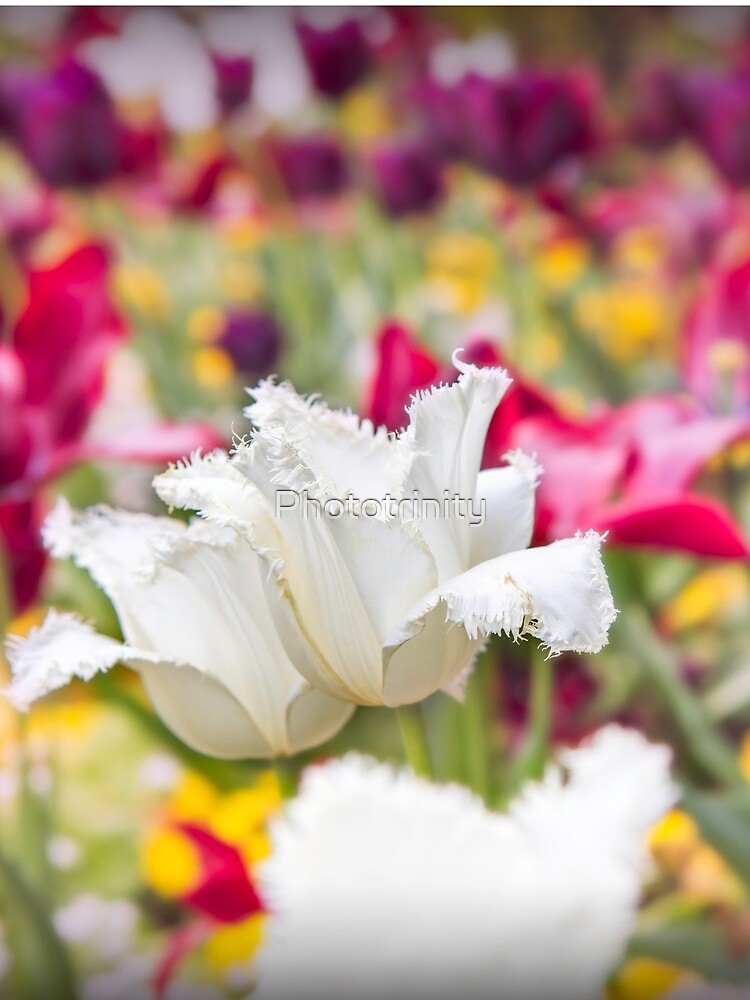 A World of Floral Colour - Springtime has Arrived by Phototrinity