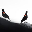 Red-Winged Blackbird Males by EthanQuin