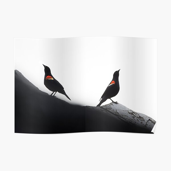 Red-Winged Blackbird Males Poster