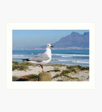 Aristocratic Seagull Art Print