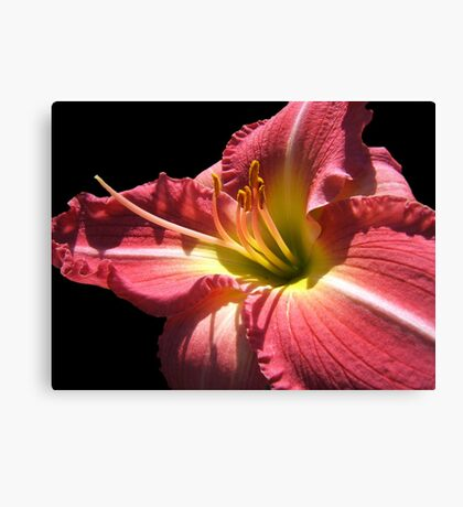 Cherry Lily © Canvas Print