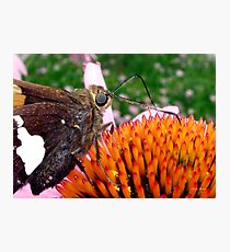 Breakfast at the garden Photographic Print