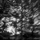 Movement in B & W (3) by brilightning