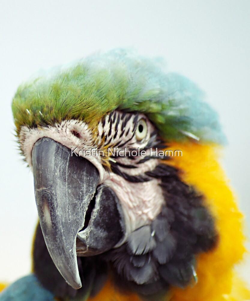 Ruffle My Feathers by Kristin Hamm