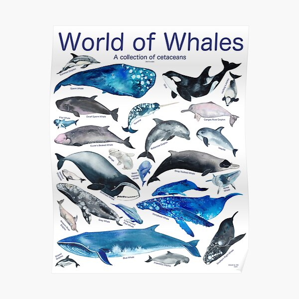 World of Whales Poster
