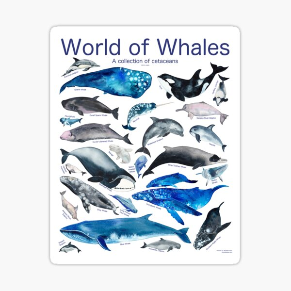 World of Whales Sticker