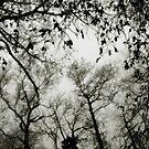 Trees by laurentlesax