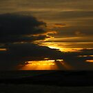 sea light. winter. tasman sea by tim buckley   bodhiimages