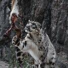 Snow Leopard by Gustav Nordlund