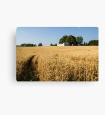 A Path in the Golden Wheat Field Canvas Print