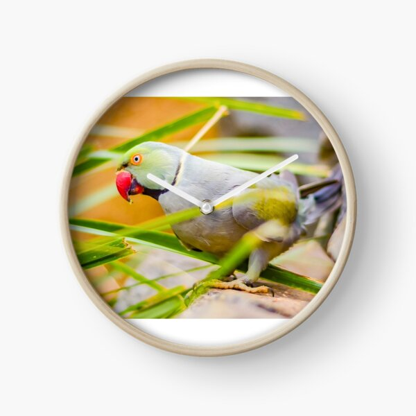 Indian Ringneck Parakeet Clock