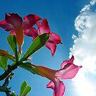 Flower Sky by Digby