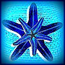 Starfish in blue by ©The Creative  Minds