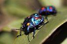 Pretty Blue Bugs by yolanda