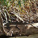 Croc on a log by georgieboy98