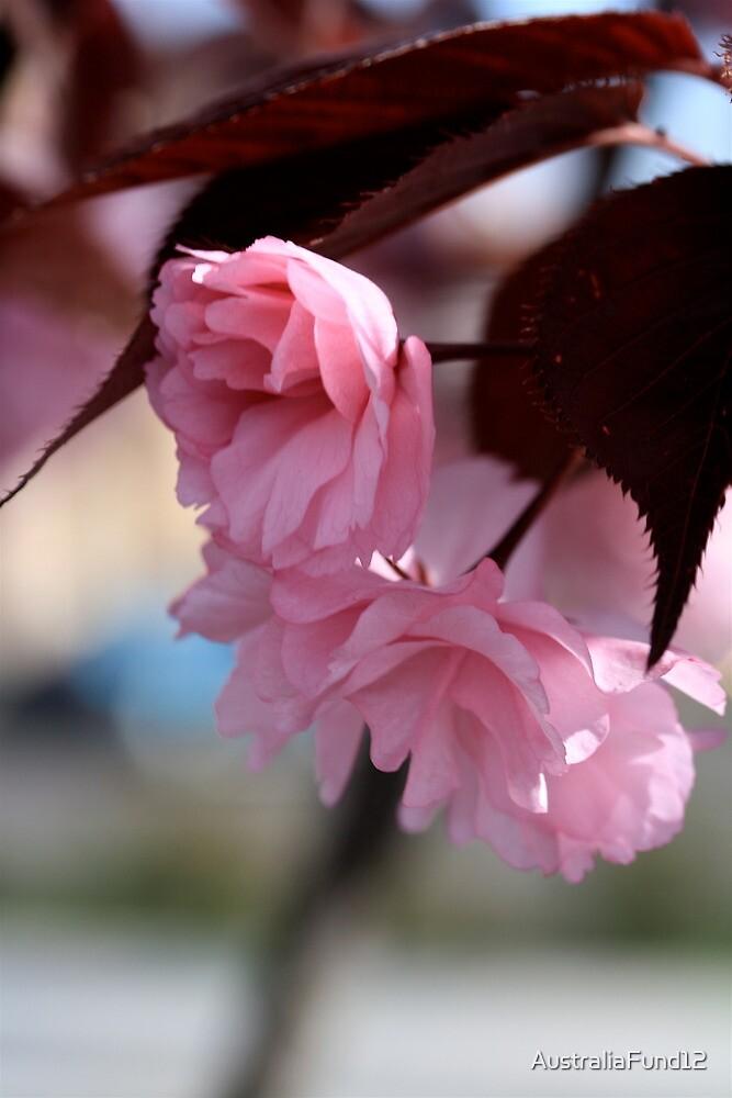 Soft Bloom by AustraliaFund12