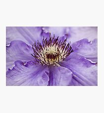 Clematis Stamens Photographic Print