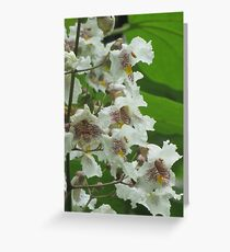 Indian Bean Tree Blossom V Greeting Card