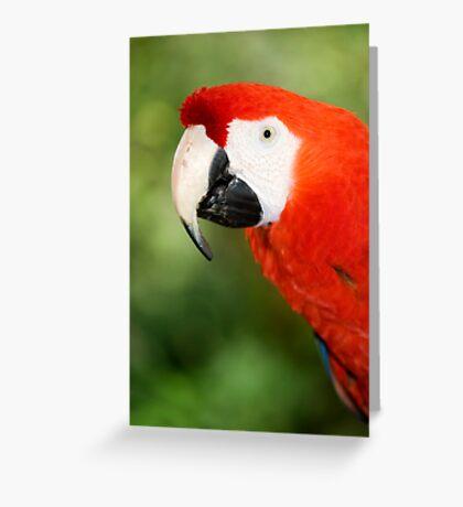 Scarlet Macaw  Greeting Card